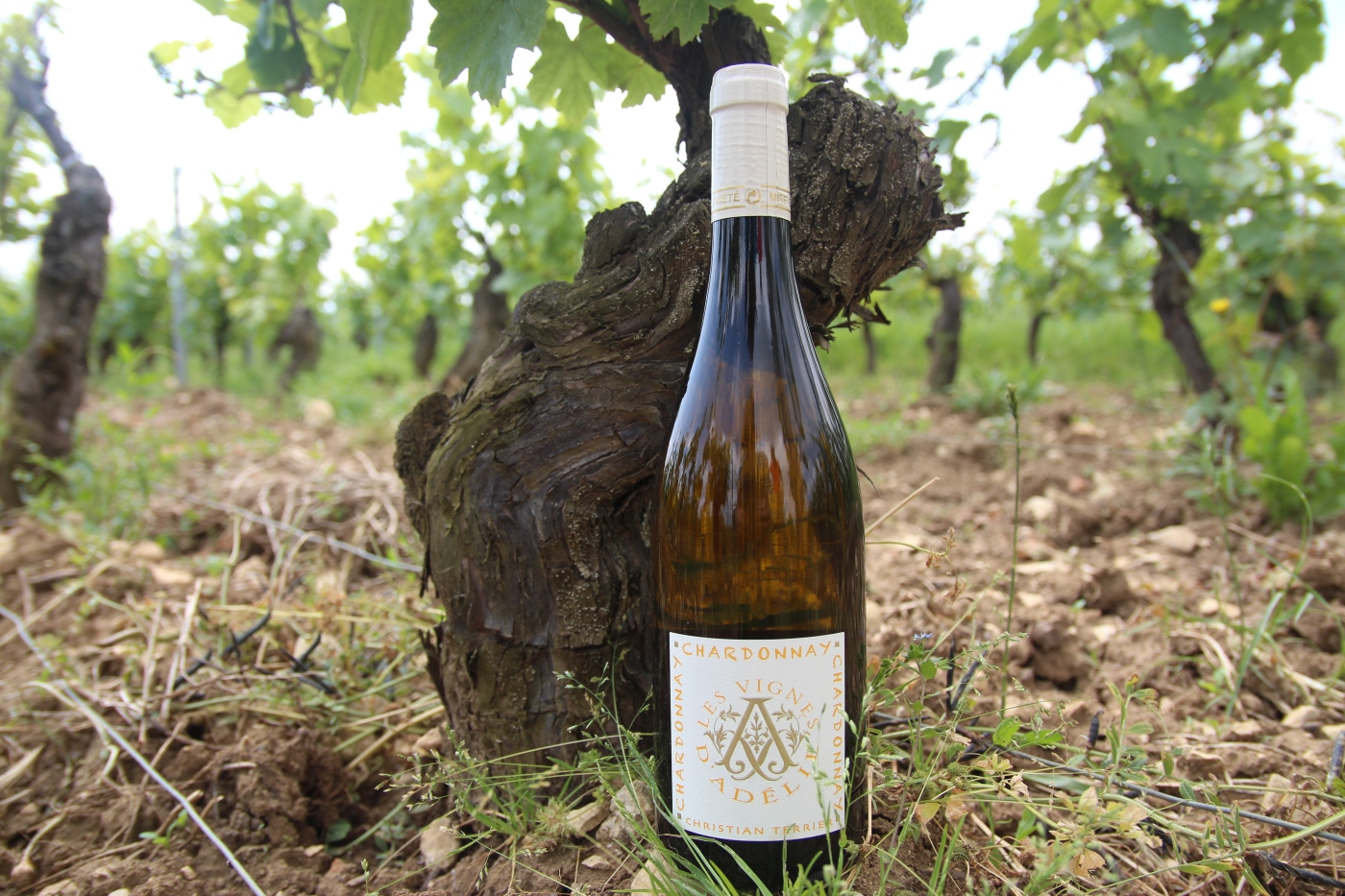 Bouteille_Chardonnay